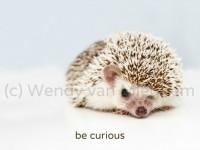 ansichtkaart be curious / wees nieuwsgierig