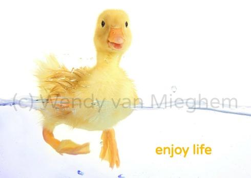 Kaartenset Wisdom - Wendyvanmieghem.nl