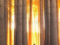 Bewust leven 2-in-1 Poster A4 We zijn een
